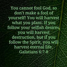 Galatians 6:7-8 what you sow you reap