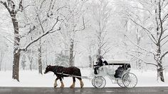 Take a ride on a horse drawn carriage in a historical town or city.  I love the sound of horse hooves on cobblestones!