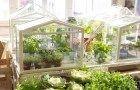 ikea-greenhouse2