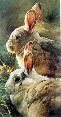 """""""Rabbits"""" Watercolor Stan Miller"""