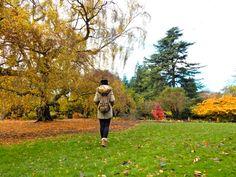Los principales barrios de Edimburgo - Cualquier Destino - Autumn in Edimburgh