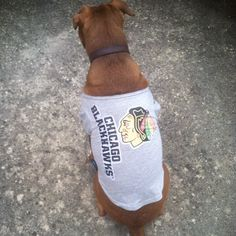 This pup is ready. #Blackhawks #CHIvsSTL