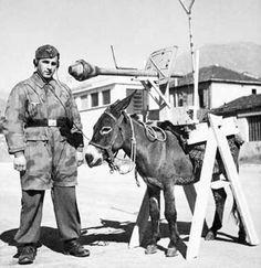 Panzerfaust auf Esel :-) Peut-être un Panzerschütze de la Fallschirm-Panzer-Division 1 « Hermann Göring Narvik, Luftwaffe, Paratrooper, Ww2 German, German Army, Saturday Memes, Ww2 Photos, Photographs, Funny Memes