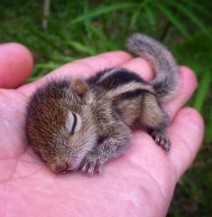 20+ Baby Animals That Can Save Your Gloomy Day | FunMary