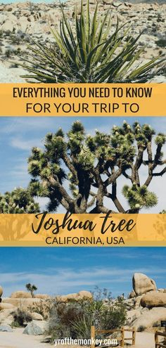 Joshua tree guide is a first time visitors guide to Joshua tree national Park, California, USA. Includes information on best Joshua tree hikes, Joshua tree trails, hotels and restaurants near Joshua tree national Park. Read this guide for a day trip to Jo