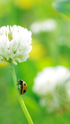 White-Flowers-Bokeh