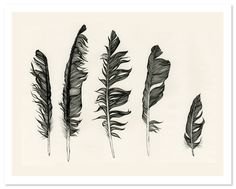 claire scully feathers