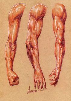 arm by ohchoongho Arte Com Grey's Anatomy, Arm Anatomy, Human Anatomy Drawing, Human Figure Drawing, Anatomy Poses, Body Anatomy, Human Anatomy For Artists, Body Reference Drawing, Body Drawing