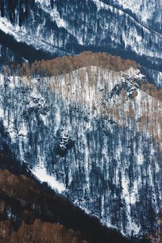 mountains, snow, trees, bare, winter, early fall