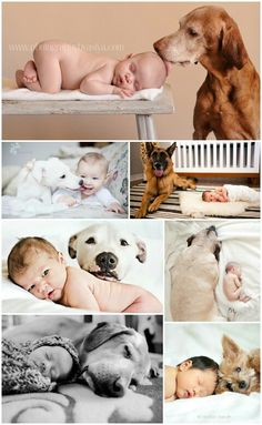 I only hope that my future dogs and babies are this close. <3