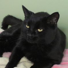 His name may be Lucky but he hasn't been lucky in love. Poor guy! Click to view Lucky's cat adoption profile