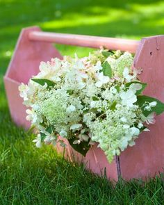 12 Top Midwest Perennial Flowers   Midwest Living-6-8 feet tall and wide Panicle Hydrangeas