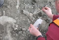Cambridge plesiosaur discovery.  A very fossiliferous area indeed!