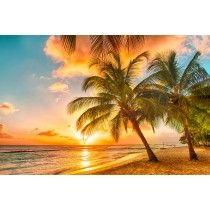 Barbados Palm Strand
