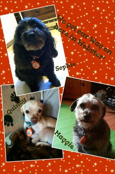 Sophie, Maddie, and Paws NE alum Quincy are hoping that YOU have your WagAware Charms!