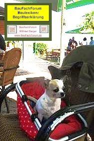 Chihuahua Freund Kamerad Helfer Www Baufachforum De Baufachforum Seepark Pfullendorf Chihuahua Als Hund Chihuahua Als Schmus Chihuahua Schmusen Tiere