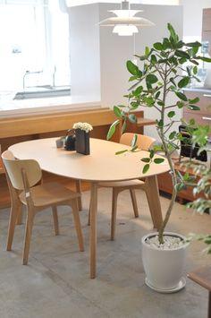 Ficus benghalensis @ HADANA