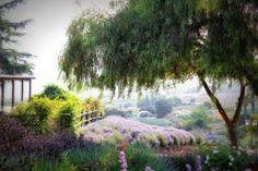 8. Keys Creek Lavender Farm -- 12460 Keys Creek Rd in Valley Center, CA