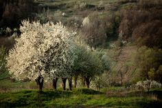 Spring by Rucsandra Calin on 500px.