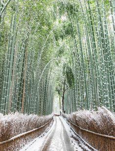 Sagano Bamboo Forest, Arashiyama, Kyoto, Japan, 嵯峨野, 竹林の道, 嵐山, 京都, 日本