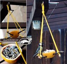 Eco bird feeder made of orange