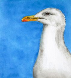 Vogel Druck Vogel Kunst Portrait Möwe Vogel Aquarell von Betty Moore