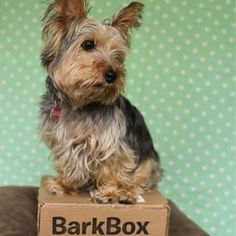 This is MY BarkBox! Fetch your own monthly box of treats, toys and goodies and save $5 with code PUPPY5! So cool