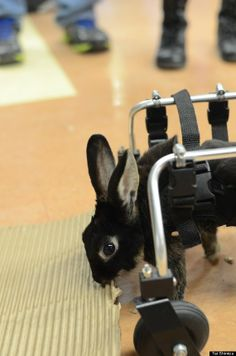 This Bunny Can't Hop, But She's Getting Around Just Fine In Her New Wheelchair
