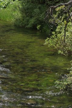 rivermusic:  Clean and Green  photo by rivermusic, June 2015