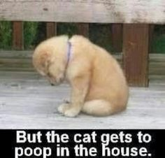 I know!  Exactly!   It's really not fair!  Lol.  What a cute pup!