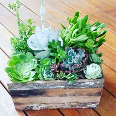 Succulent arrangement by trailofivy