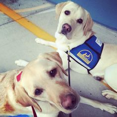 Faithful friends, Canine Companions for Independence