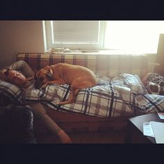 Brian Bickell and his pups napping