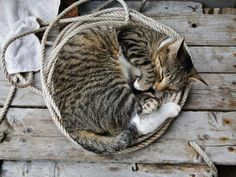 Cute Cat Curled Up in Some Rope