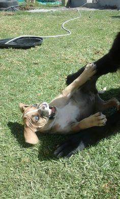 Dasha Dogs, Animals, Tejidos, Animales, Animaux, Pet Dogs, Doggies, Animal, Animais