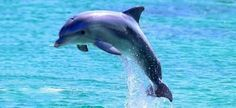 Project Jonah Teachers Resources Facts About Whales and Dolphins