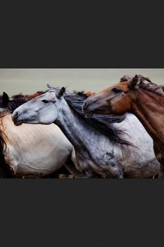 The Scorpio Races feelz All The Pretty Horses, Beautiful Horses, Animals Beautiful, Cute Animals, Zebras, Equine Photography, Animal Photography, Potnia Theron, The Scorpio Races