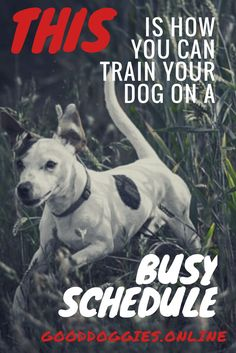 Training a dog takes time. You are busy. Really busy. So how are you going to fix all those crazy annoying things that your dog does? We have the answer. Here are 3 dog training solutions for the super busy pet parent. Dog Training Audiobooks You dont Dog Commands Training, Basic Dog Training, Puppy Training Tips, Training Pads, Agility Training, Training Collar, Training Equipment, Potty Training, Dog Minding