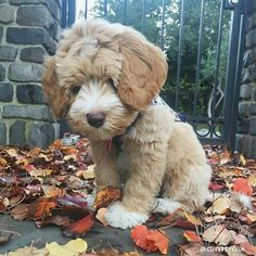 28 Small, little baby animals that melt your heart - animals are cute. Baby animals are cuter. Cute Baby Animals, Animals And Pets, Funny Animals, Cute Puppies, Cute Dogs, Dogs And Puppies, Teddy Bear Puppies, Terrier Puppies, Funny Dogs