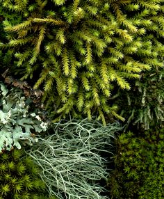 moss and lichen by horticultural art, via Flickr