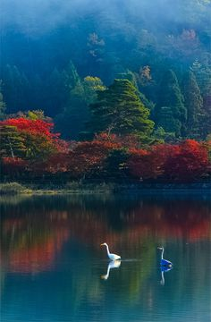 """coiour-my-world: """"Autumn lake """" Foto Nature, Image Nature, Life Is Beautiful, Beautiful Places, Beautiful Pictures, Beautiful Moon, Beautiful Morning, Landscape Photography, Nature Photography"""