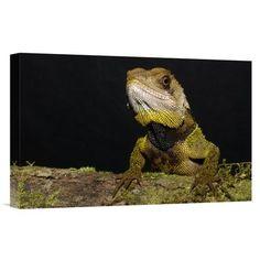 East Urban Home Ecuador Choco Rainforest Esmeraldas 'Bocourt'S Dwarf Iguana' Photographic Print on Wrapped Canvas Size: