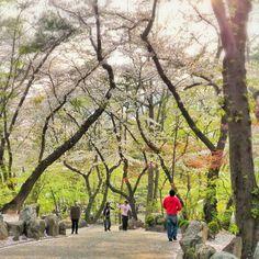 桜トンネルを抜ける