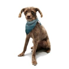 Kess InHouse Trebam 'Cijan' Navy Teal Pet Bandana and Scarf, 28 by 20 by 20-Inch >>> More info could be found at the image url. (This is an affiliate link) #DogsApparel