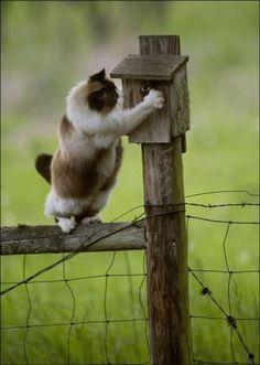 .anybody home?