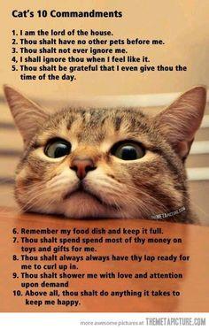Los 10 mandamientos de los gatos