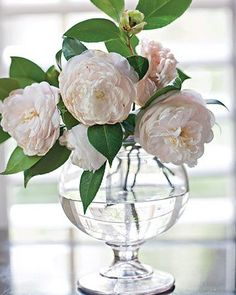 Camelias are one of my favorite flowers. Camelias and lilies. My Flower, Fresh Flowers, Beautiful Flowers, White Flowers, Colorful Roses, Elegant Flowers, Simple Flowers, Simply Beautiful, Deco Floral