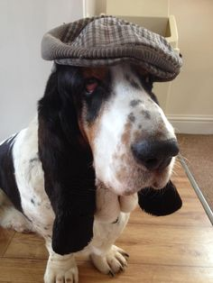 Stanley found the perfect hat to fit his personality and name (via owner Lesley)