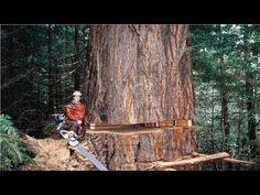 Amazing Dangerous Skills Fastest Tree Felling, Heavy Biggest Tree Cutting Down Machines Homemade Bandsaw Mill, Tree Lopping, Lumberjack Style, Homemade Modern, Tree Felling, Easy Work, Big Tree, Wood Cutting, Landscape Lighting