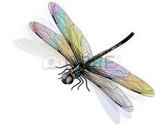 tatouage libellule: Vecteur libellule isolé et coloré.                                                                                                                                                      Plus